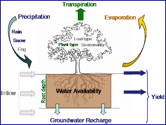 Evapotranspiration Water Cycle The Water Cycle is Simplified
